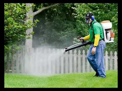 شركة مكافحة حشرات بالثقبة