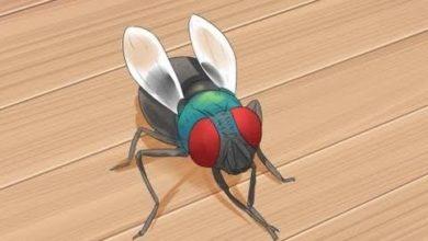 Photo of شركة مكافحة حشرات بعرعر
